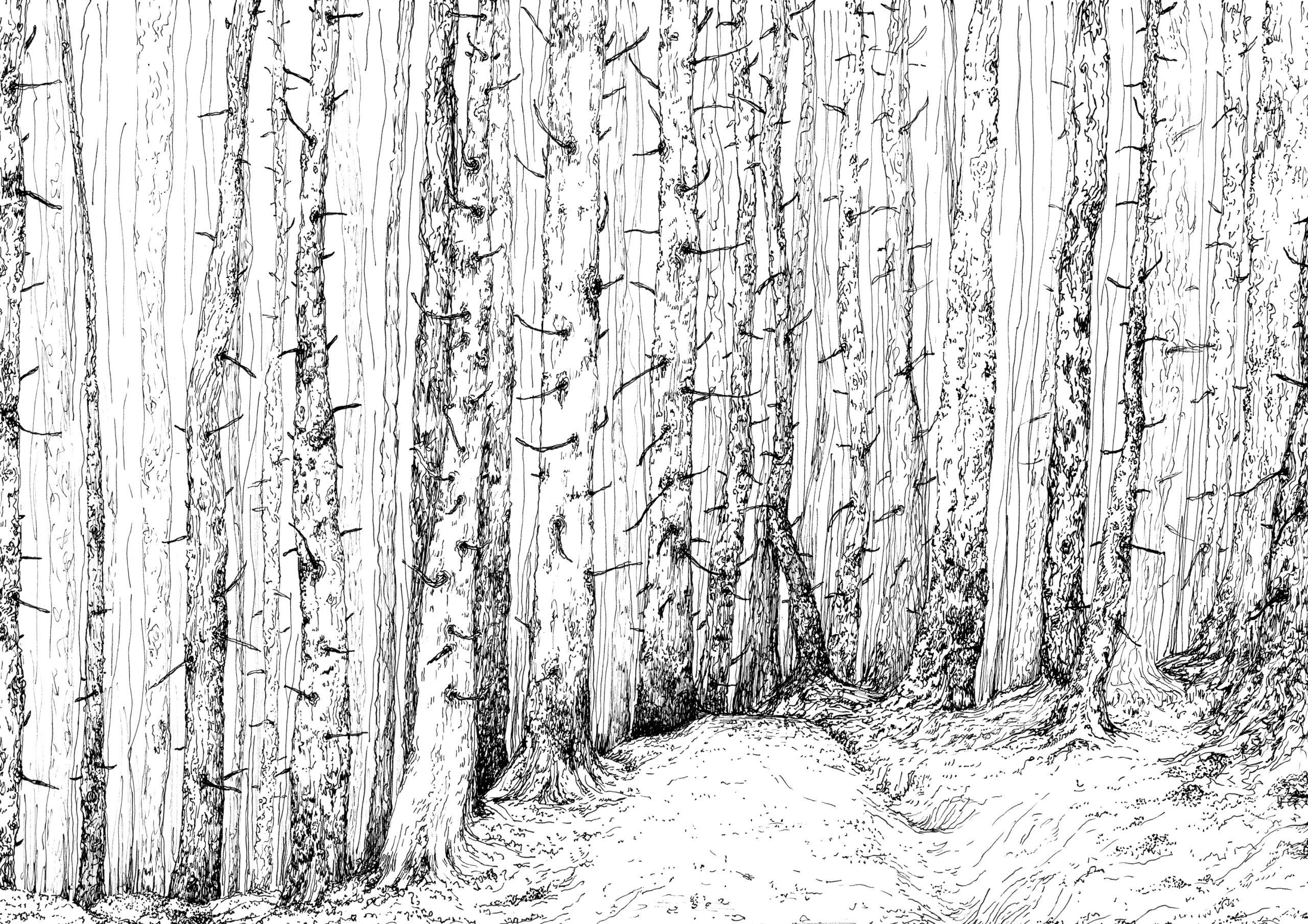 forest Kopie 2